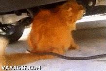 Enlace a No sé si es un gato muy valiente o muy ingenuo