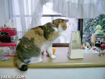 Enlace a Al gato le gusta el metrónomo