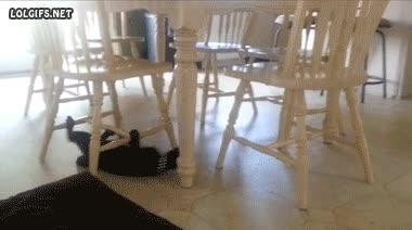 Enlace a Mi gato acostumbra a pasar entre sillas por encima, éste es más de ir por debajo