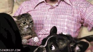 Enlace a Parece que este gato no tiene intención de hacerse amigo del perro