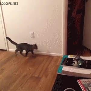 Enlace a Los gatos siempre se asustan a máxima potencia