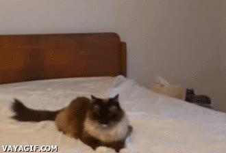 Enlace a Subo, te doy y me voy, porque soy un gato