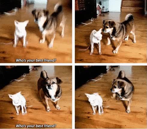 Enlace a Ahora ya sabemos quién es su mejor amigo
