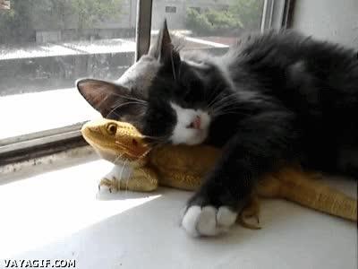 Enlace a No me importa lo que diga la gente, yo le amo señor dragón barbudo