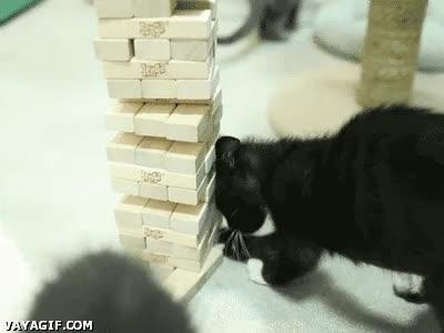 Enlace a Gatos que saben jugar al Jenga mejor que tú