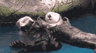 Enlace a ¿Sabías que las nutrias se cogen de la mano para que no las arrastre la corriente mientras duermen?
