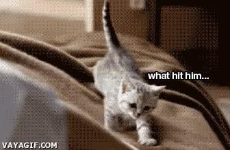 Enlace a ¿Quién no quiere un gato-despertador como éste?