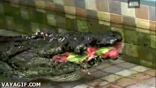 Enlace a La potencia de las mandíbulas de un cocodrilo