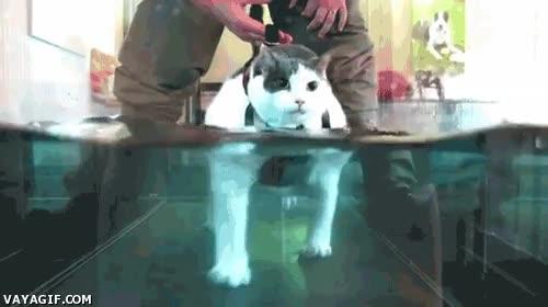 Enlace a Esto es rehabilitación para los gatos con problemas motrices