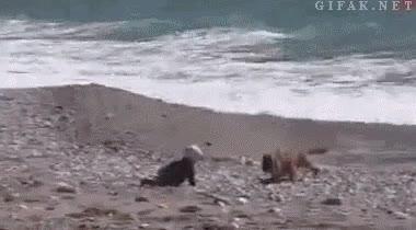 Enlace a Perro intentando evitar que un bebé se acerque demasiado a la orilla