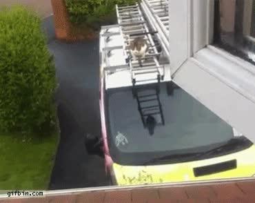 Enlace a ¡El gato bombero al rescate!