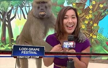 Enlace a El babuino sabe lo que quiere