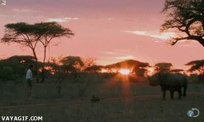 Enlace a Aguantarle la mirada a un rinoceronte negro y conseguir que huya, ¡qué valor!