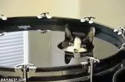 Enlace a Creo que este gato quiere conocer el mundo de la música desde dentro