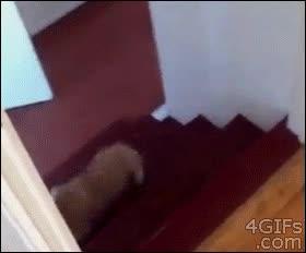 Enlace a Uf, es que bajar las escaleras es tan cansado, mejor hago la croqueta
