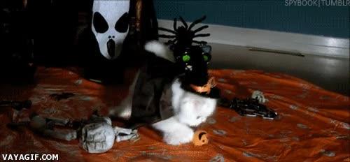 Enlace a ¡Preparaos mortales, el temor de la noche de Halloween se acerca!