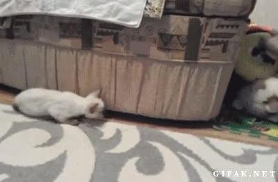 Enlace a Ya hay que tener mala fe, pobre gato