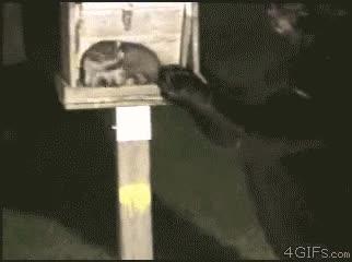 Enlace a Hola señor mapache, ¿tendría un momento para nuestro señor Osocristo?