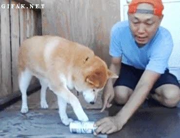 Enlace a El perro que quería colaborar con el reciclaje de la casa