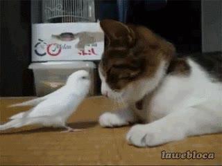 Enlace a Lo haces muy bien, pájaro esclavo