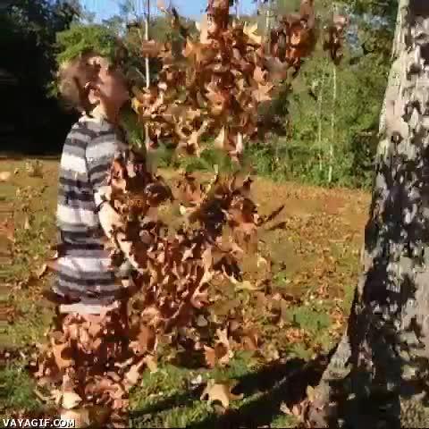 Enlace a Oh, el otoño, las hojas secas cayendo de los árboles...