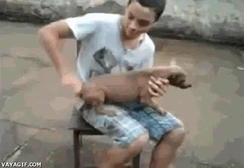 Enlace a Mi perro funciona a cuerda