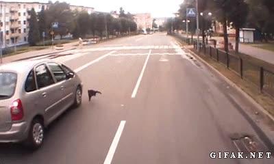 Enlace a No sé si este gato no había visto al coche y ha tenido suerte o quería atacar la rueda