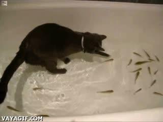 Enlace a Clases particulares de pesca para gatos