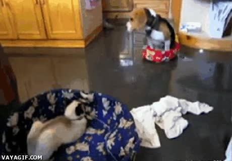 Enlace a El gato es el dueño de la casa