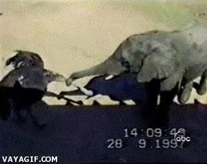 Enlace a En una pelea entre un elegante y un avestruz, el elefante tiene una cierta ventaja