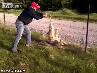 Enlace a Una mano amiga ayudando a un lobo que había quedado atrapado