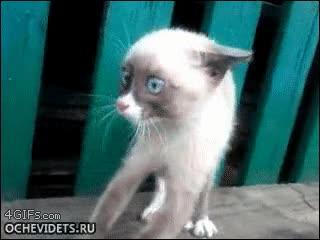 Enlace a El gato que vio cosas horribles