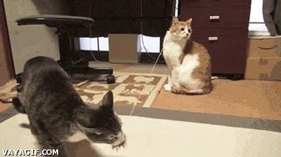 Enlace a Gato trolleando con su juguete de goma