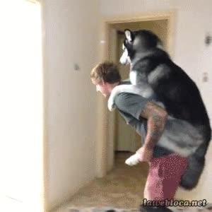 Enlace a Una cosa es mimar al perro, pero esto ya es pasarse