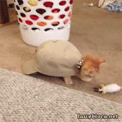 Enlace a A la mierda con ser gato, yo quiero ser una tortuga