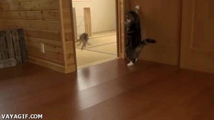 Enlace a Gatos y sus métodos para asustar