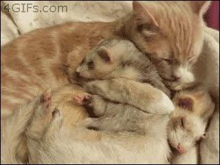 Enlace a Día 14, mamá gato nos cría como a uno de los suyos, no sospecha nada
