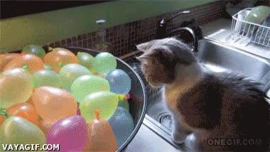 Enlace a Globos de agua, un gran descubrimiento hecho por gato