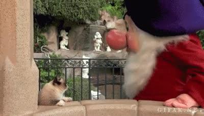 Enlace a Grumpy cat conociendo a Grumpy Dwarf en Disneyland, ¡vaya dos gruñones!