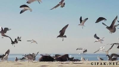 Enlace a Troleando en la playa