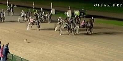 Enlace a ¿Dices que los caballos son muy rápidos?