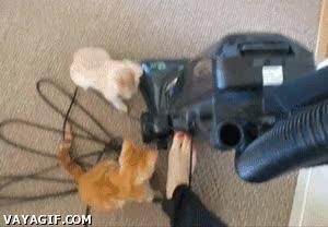 Enlace a El terror de los gatos