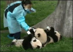 Enlace a Dando de comer a los cachorros pandas, no se puede ser más adorable