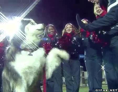 Enlace a No sé que habrá hecho este perro para tener tantas fans, pero yo también quiero