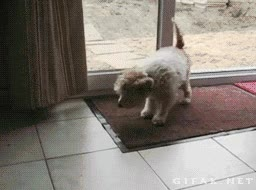 Enlace a Un perro bien educado se limpia las patas antes de entrar por casa