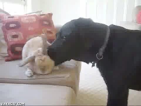 Enlace a A ver, deja que te huela porque para ser un perro tienes las orejas muy grandes...