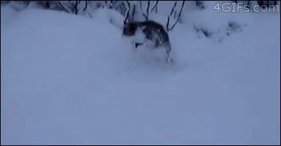 Enlace a Un gato jugando con la nieve