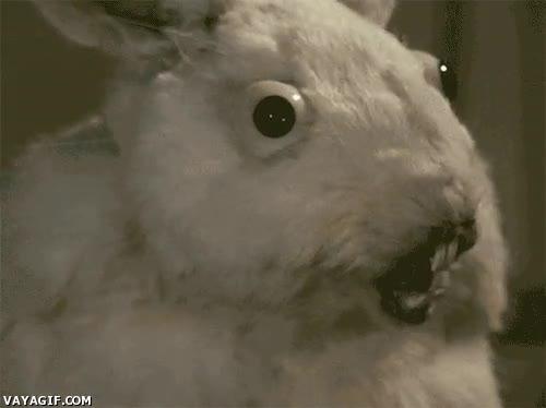 Enlace a Pepe, ¿qué le has dado de comer al conejo?