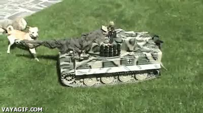 Enlace a Perros atacando a un tanque teledirigido