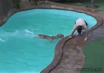Enlace a Estar en la piscina tranquilamente y que de repente te aparezca...